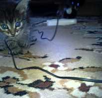 Защита проводов от кошек и котов