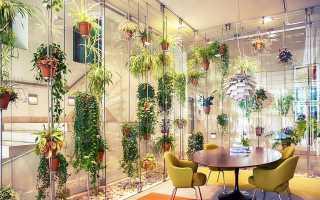 Зимняя досветка комнатных растений и рассады: как правильно выбрать фитолампу