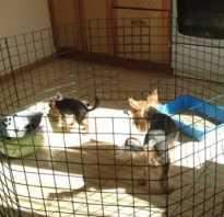 Как сделать квартирный вольер для собачки